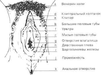 shema-zhenskaya-vlagalishe