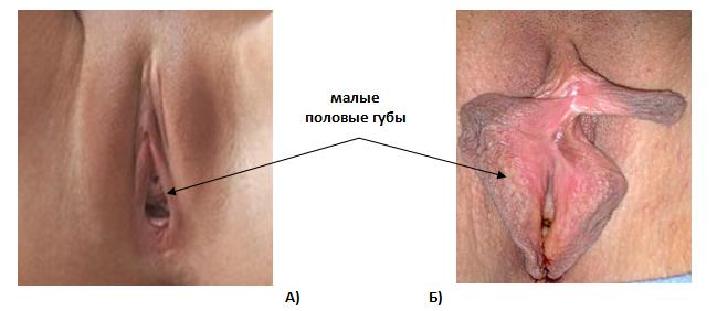 polnaya-zadnitsa-spermi