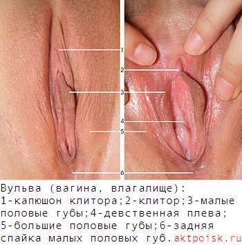 vagina-kakie-bivayut-s-foto